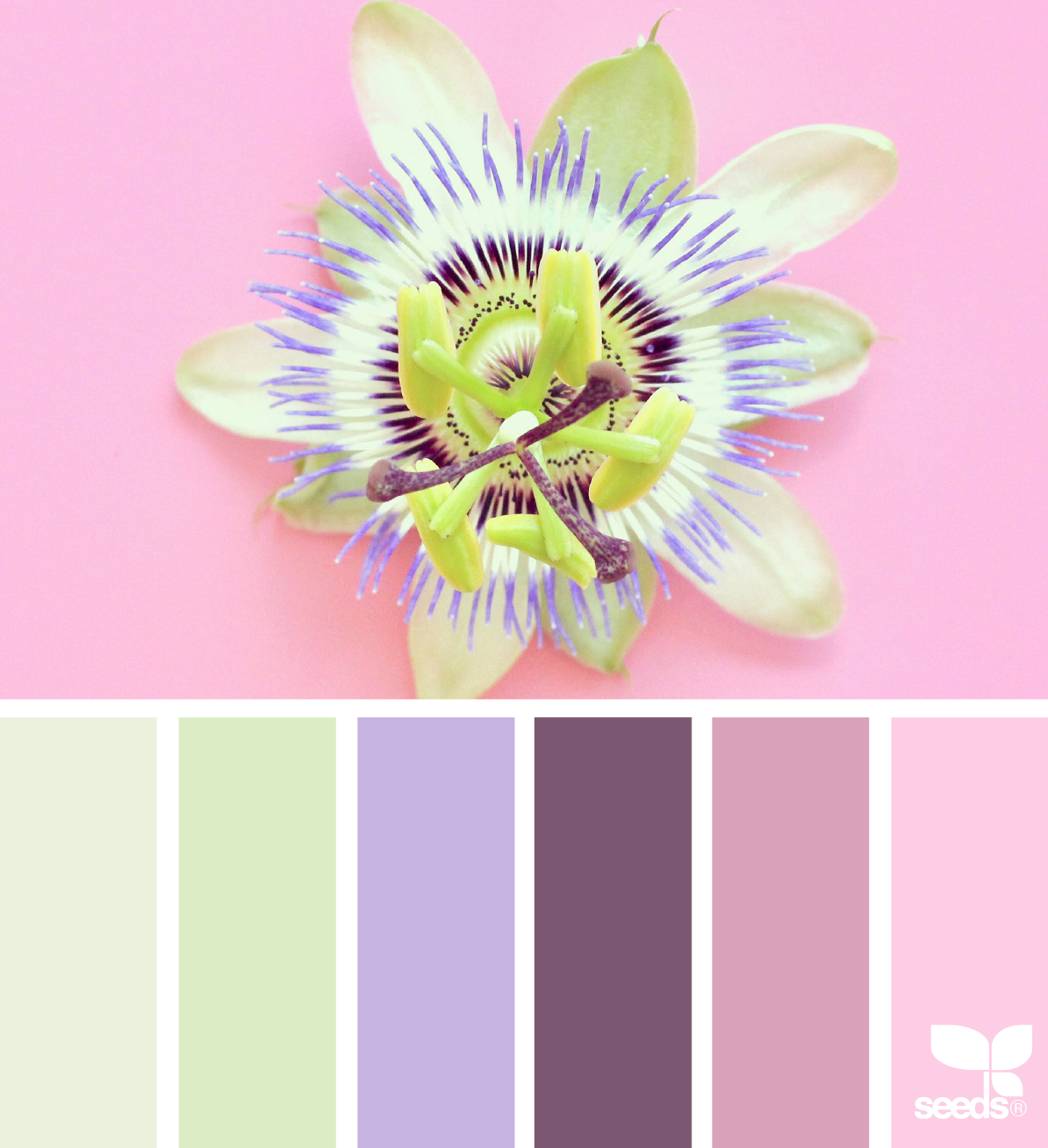 spring color palette inspiration elan studio